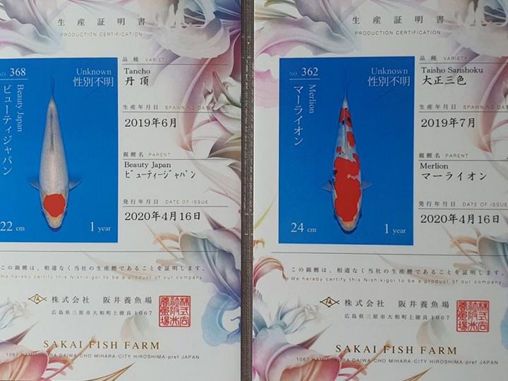 Het mini-mango festival