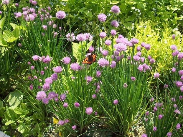 Hoe leg je een plantenfilter aan