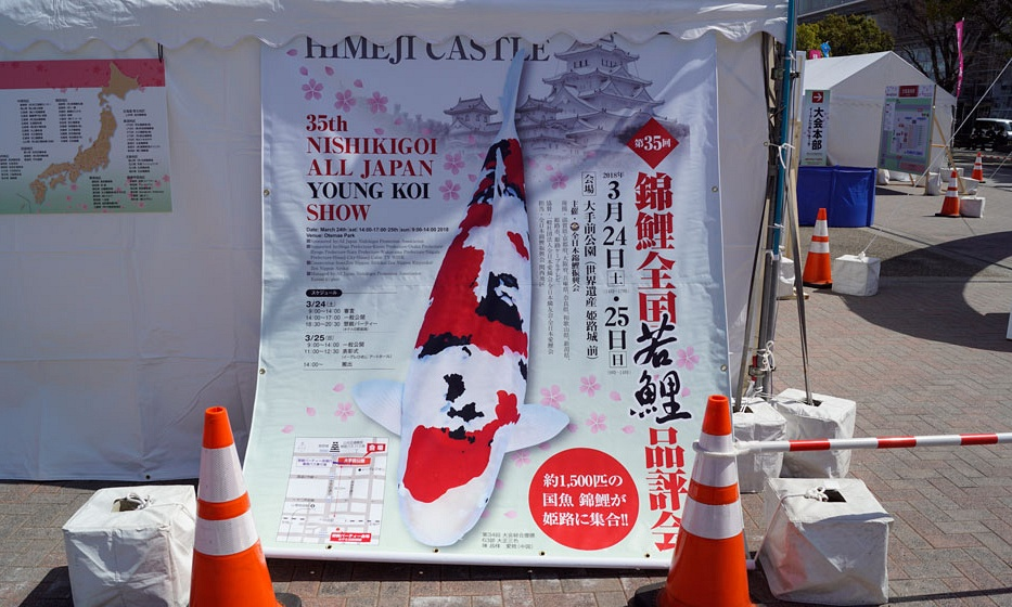 All Japan Young Koi Show en Himeji Castle