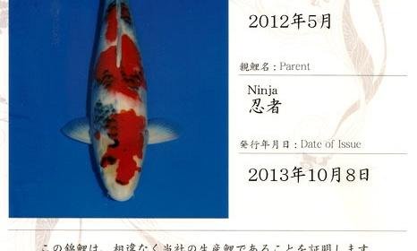 Certificaten Sakai FF