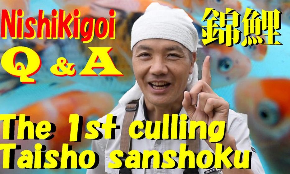 De 1ste selectie van koi volgens Nishikawa