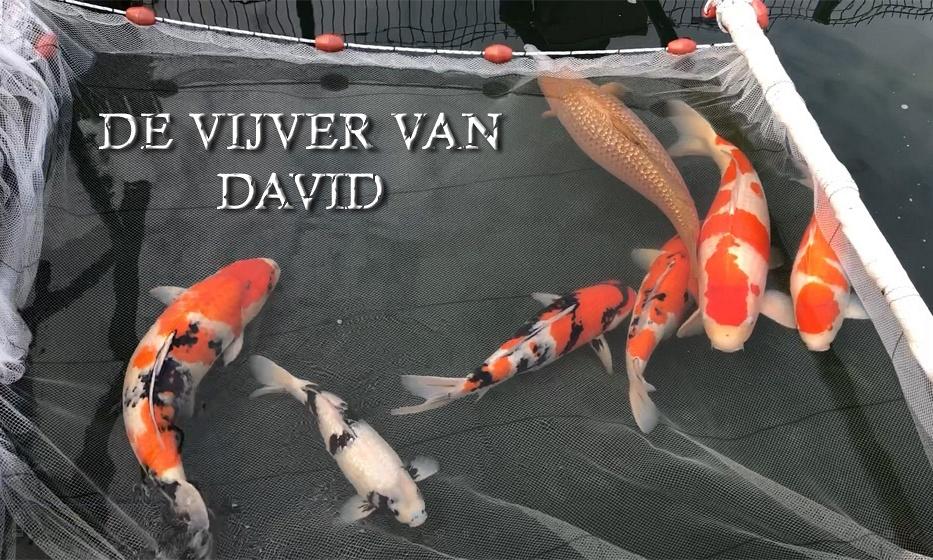De vijver van David