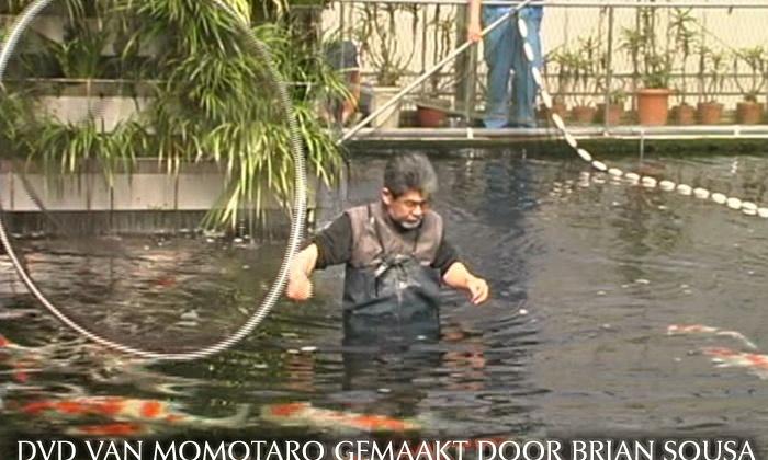 DVD van Momotaro