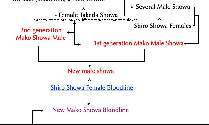 Mako Showa bloedlijn