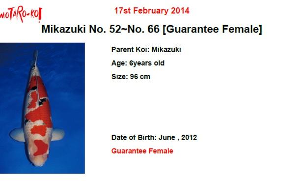 Momotaro auction 17 februari - Sanke