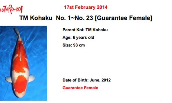 Momotaro auction 17 februari