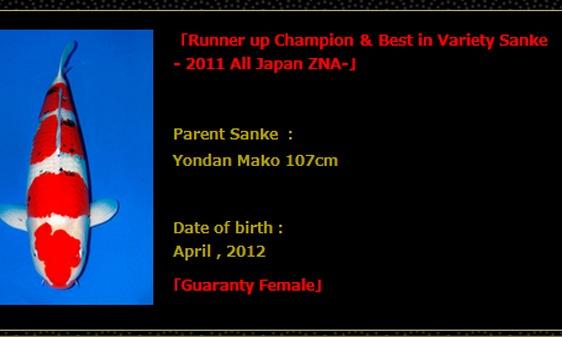 Sanke veiling Momotaro 9 april