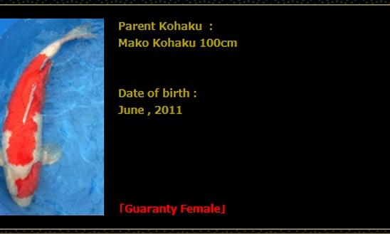 Veiling Momotaro 9 april