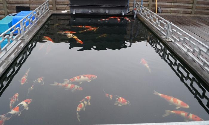 Zie ze zwemmen, zie ze genieten