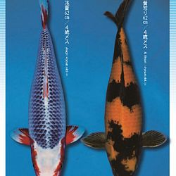 3de Narita veiling: afbeelding 3