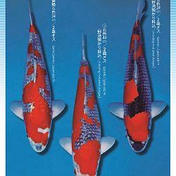 3de Narita veiling: afbeelding 7