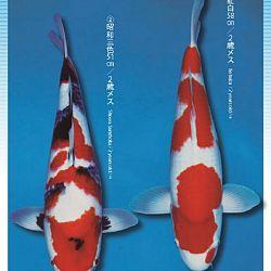 3de Narita veiling: afbeelding 8