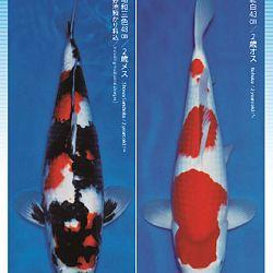 3de Narita veiling: afbeelding 13