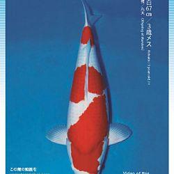 3de Narita veiling: afbeelding 19