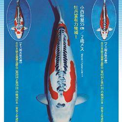 3de Narita veiling: afbeelding 21
