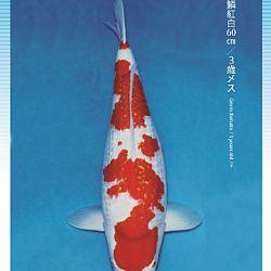 3de Narita veiling: afbeelding 23