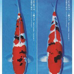 3de Narita veiling: afbeelding 24