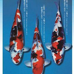 3de Narita veiling: afbeelding 30