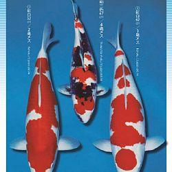 3de Narita veiling: afbeelding 35