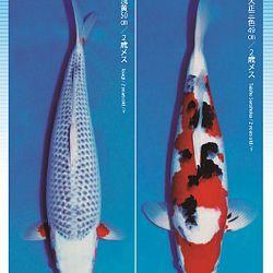 3de Narita veiling: afbeelding 38