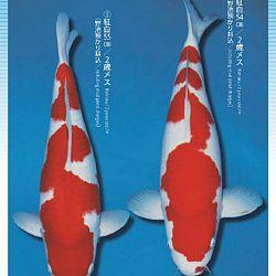 3de Narita veiling: afbeelding 41