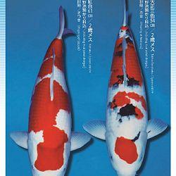 3de Narita veiling: afbeelding 43