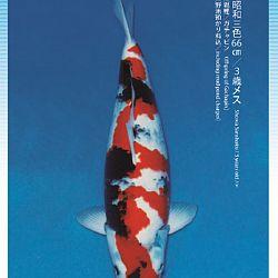 3de Narita veiling: afbeelding 44