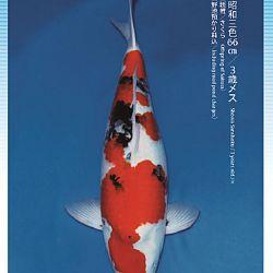 3de Narita veiling: afbeelding 46