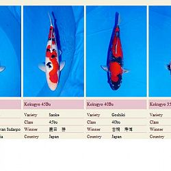 Andere uitslagen 44ste All Japan Show: afbeelding 11