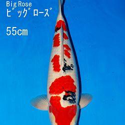 Bevestiging vanuit Japan: afbeelding 1