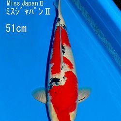 Bevestiging vanuit Japan: afbeelding 4