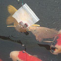 Bioleven in de biochip: afbeelding 3