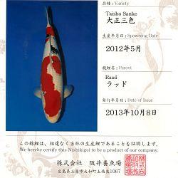 Certificaten Sakai FF: afbeelding 4