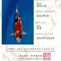 Certificaten Sakai FF: afbeelding 8