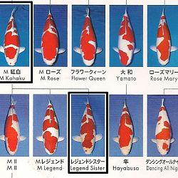 Certificaten Sakai FF: afbeelding 17