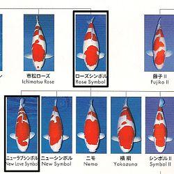 Certificaten Sakai FF: afbeelding 18
