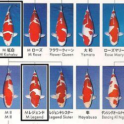 Certificaten Sakai FF: afbeelding 19