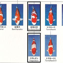 Certificaten Sakai FF: afbeelding 22