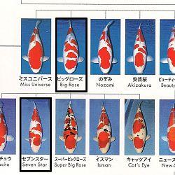 Certificaten Sakai FF: afbeelding 28