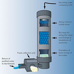 Clarity Proteine Skimmer: afbeelding 3