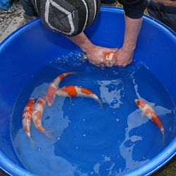 Dankbare vissen: afbeelding 3