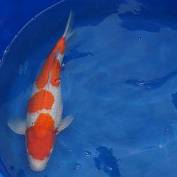 Dankbare vissen: afbeelding 5