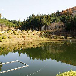 De 2 kohaku even onder de loep: afbeelding 7