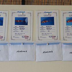 De enveloppekes zijn klaar: afbeelding 1