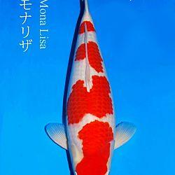 De persoonlijkheid Narita: afbeelding 1