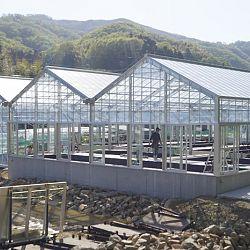De Taniguchi Story: afbeelding 13