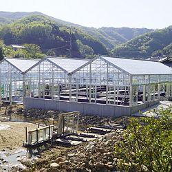 De Taniguchi Story: afbeelding 14