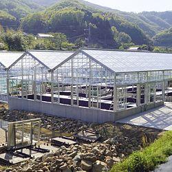 De Taniguchi Story: afbeelding 15