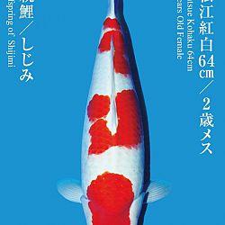 De Tategoi Kai: afbeelding 3