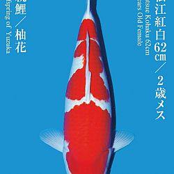 De Tategoi Kai: afbeelding 4